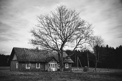 gyvenimas po klevu / life under the maple tree (daimak) Tags: lithuania countryside maple tree landscape bw sonyilce7