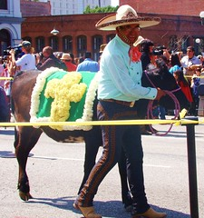"LA Bleesing of the Animals - ""and a cow shall lead them"" (ramalama_22) Tags: la los angeles blessing animals downtown olvera street tradition archbishop gomez parade procession easter good friday baby cow leader first blanket cross sombrero"