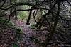 Forgotten paths (Nelleke C) Tags: 2017 letterdyfehouse roundstone connemara countygalway garden holiday ierland ireland tuin vakantie