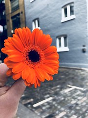 A Flower and a Brick Road (mirandammorgan) Tags: flowers ukarchitecture touristshop