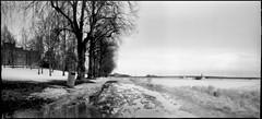 Slush on the promenade (Foide) Tags: pinhole pinholetree f200 realitysosubtle slush snow ice