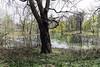 Early Spring Scene (Joe Josephs: 3,166,284 views - thank you) Tags: centralpark landscape nyc newyorkcity travel travelphotography city citypark cityscape outdoors park urbamexploration urban urbanparks spring lake pond peaceful tranquil quiet