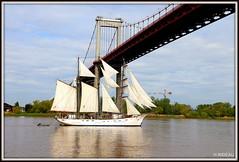 Départ du MARITE. (Les photos de LN) Tags: marite voilier bordeaux aquitaine garonne estuaire voiles pontdaquitaine morutier escale départ