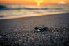 Walking to the hard life :) (TONY DASS) Tags: select turtle beach sea sony freedom sunset afternoon guatemala