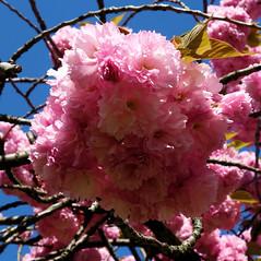 Flower Power (andtor) Tags: berlin germany rx100 frühling spring printemps springtime