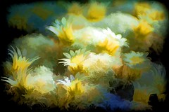 What sunshine is to flowers, smiles are to humanity (Irene2727) Tags: flowers petals white yellow blur vignette nature flora floral
