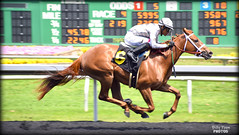 Cozze Kid - May 4, 2018 Maiden Special Weight @ Golden Gate Fields (billypoonphotos) Tags: tapeta golden gate fields berkeley jockey horse racing thoroughbred dirt track photo picture photography photographer billypoon billypoonphotos nikon d5500 18140mm nikkor news stretch win finish synthetic race 18140 mm sign sport stadium building grass people road cozze kid shanghai chestnut filly 2018 gomez alejandro