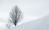 Winter simplicity (Ettore Trevisiol) Tags: ettore trevisiol nikon d7200 d300 friuli tree sunset blue hour goldenhour verzegnis tolmezzo winter snow