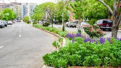 2018.05.06 Vermont Avenue, NW Garden - Work Party, Washington, DC USA 01922