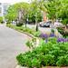 2018.05.06 Vermont Avenue, NW Garden - Work Party, Washington, DC USA 01922