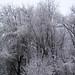 Snow-covered trees (2 April 2018) (Newark, Ohio, USA) 2