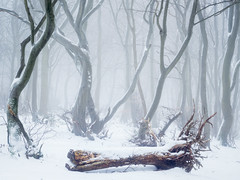 Condolences (Damian_Ward) Tags: ©damianward damianward trees chilterns chilternhills thechilterns fog mist wood forest woodland snow winter cold