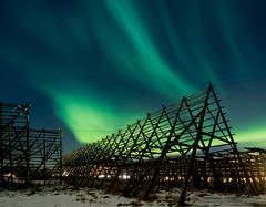 Drying Racks (Schmeich) Tags: lofoten northen light auroa borealis svolvaer winter norwegen norge landscape lights color colour svolvær norway