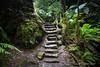 Enchantment (An Gobán Saor) Tags: enchantment steps grandcanyontrack bluemountains newsouthwales gobánsaor angobánsaor