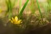 modest (Koberek@) Tags: sulików koberek sony slt 37 poland polska lower silesia dolnyśląsk macro makro tamron 90 landscape light spring wild wald winter wiosna krajobraz