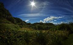 west coast tauranga bay 13a (Bilderschreiber) Tags: tauranga bay bucht westcoast west coast neuseeland newzealand southisland südinsel sonne sun