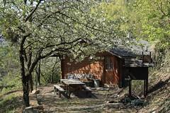 un coin de mon village (bulbocode909) Tags: valais suisse montagnes nature chalets arbres forêts printemps fleurs vert tables chaises