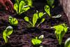 (2018.05.07) Horda Escolar no Cemeb Ana Maria Roncagli (Prefeitura de Itapevi - Perfil Oficial) Tags: prefeituradomunicípiodeitapevi secretaria de educação e cultura alelo horta canteiro escola escolar crianças terra planta plantando plantio cultivando natureza preservação reciclagem parceria cemeb carlos ramiro castro garrafa pet alimento felipebarros fotografofelipebarros fotosfelipebarros felipefbarros fotografoitapevi felipebarrositapevi