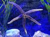 2018_03_SeaLife11 (GrazerX) Tags: sealife lochlomond aquarium fish scotland graemesimpson samsung galaxy s9 s9plus starfish