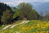 Now Spring... (JohannesMayr) Tags: allgäu bayern bavaria germany deutschland frühling spring wolken clouds blumen flowers löwenzahn blüte alpen haus wald wood house hütte weg pfad zaun fench