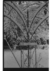 P60-2018-019 (lianefinch) Tags: argentique argentic analogique monochrome blackandwhite blackwhite bw noirblanc noiretblanc nb analog jardin garden hiver winter snow neige frozen gelé