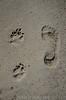 20180408 MARKGRAFENHEIDE (5).jpg (Marco Förster) Tags: dobermann hunde natur markgrafenheide ostsee strand frühling