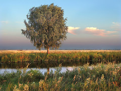 The birch (arthurverigin) Tags: birch russia river midday summer meadow field grassland pasture
