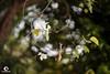 花の寫真。 (ORANGEREPUBLIC) Tags: photolovers photoshopexpress iso100 photoeditor manualfocus blur sonya7r2 mirrorless beautifulbokeh 花の寫真 lonely natural mitakon50mmf095 f095 fullframe