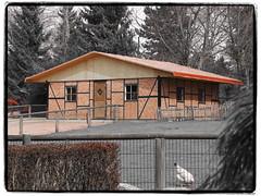 Ziegenstall (1elf12) Tags: fachwerk maisonàcolombages halftimbered ziegenstall zoo archenoah germany deutschland braunschweig stöckheim