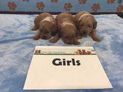 Dakot Girls 4-22