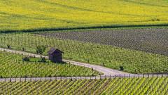 Mozaique de Champagne (ZeGaby) Tags: champagne landscapes marne naturephotography pentaxk1 sigma100300mmf4 champs field vines vineyards vignobles
