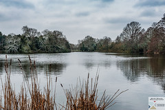 OPark_DSC8654 (Nick Woods Photography) Tags: landscape waterscape waterreflections waterscene lake lakescene pond pondscene water snow winter winterscene trees freshwater cold osterley osterleypark nationaltrust nt