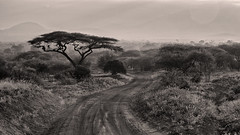 Monochrome Tsavo (Thomas Retterath) Tags: adventure wildlife abenteuer safari natur nature kenya africa afrika tsavowest thomasretterath