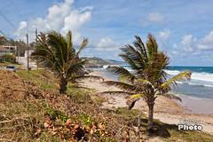 Barbados - 2017-11 (@Digbeyphoto) Tags: barbados bathsheba caribbean bridgetown saintmichael bb