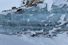 glace (bulbocode909) Tags: valais suisse zermatt glace neige gel rochers montagnes nature