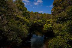 RIO - CALOBRE (PANAMA) (mestremur) Tags: camera alpha a7rii sony zeisslens bridge black blue sky cielo caudal aqua agua verde arboles rio river nature