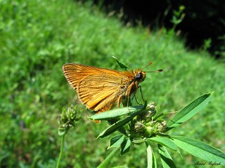 Butterfly 1637