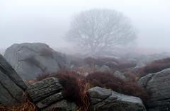 NB-2.jpg (neil.bulman) Tags: countryside longshawestate tree peakdistrict nature nationalpark derbyshire longshaw trees rocky rocks sheffield england unitedkingdom gb