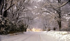 What wonders to be found in Wonderland.. (Captions by Nica... (Fieger Photography)) Tags: winter weather trees tree nature serene snow storm snowstorm street road cold covered outdoor suburbs quebec canada march