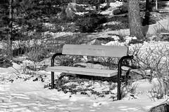 IMG_0054 (www.ilkkajukarainen.fi) Tags: blackandwhite mustavalkoinen monochrome matinkylä espoo visit happy life suomi suomi100 finland finlande winter talvi snow ice