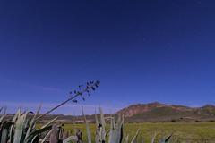 Pita acariciada por estrellas (CrisGlezForte) Tags: pita naturaleza cielo montaña flores almería estrellas