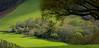 Pays Basque (FRANCOIS VEQUAUD) Tags: paysbasque itxassou itsasu sudouest 64 vert printemps prairie atharry coteau bois