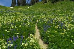 Flowery Hillside (akortrey) Tags: grandtetonnationalpark wilderness wyoming tetoncresttrail wildflowers