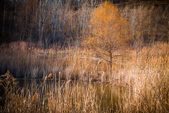 The Tree (A Great Capture) Tags: toronto tree landscape agreatcapture april22018 brickworks evergreenbrickworks agc wwwagreatcapturecom adjm ash2276 ashleylduffus ald mobilejay jamesmitchell on ontario canada canadian photographer northamerica torontoexplore spring springtime printemps