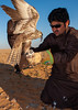 Saudi man with falcon perching on hand eating a pigeon, Al-Jawf Province, Sakaka, Saudi Arabia (Eric Lafforgue) Tags: adultonly aljawf aljouf animal animalthemes animalsinthewild arabia arabianpeninsula beard bird birdofprey birds birdsofprey colourimage culture day desert falcon falconry feather gulfcountries humanbeing hunt ksa ksa1466 man men middleeast oneadultonly oneanimal onemanonly oneperson outdoors realpeople saudiarabia sunglasses tradition traditionalclothing travel vertical wildlife sakaka aljawfprovince