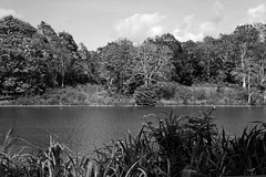 The Lake (LVazquezSanlley) Tags: blackwhite landscape lake water tree
