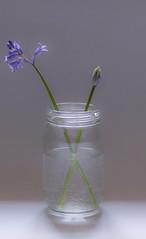 Bluebells and Jam jar (Upstart Photography) Tags: fine art flowers blueebell jam jar glass water blue colour green spring england uk
