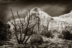 Capitol Reef, Utah (EdBob) Tags: capitolreef utah southwest americansouthwest nationalpark desert geology rock formation tree dead sky sepia blackwhite blackandwhite monochromatic monochrome clouds outdoors travel spring hike hiking edmundlowephotography edmundlowe usa america allmyphotographsare©copyrightedandallrightsreservednoneofthesephotosmaybereproducedandorusedinanyformofpublicationprintortheinternetwithoutmywrittenpermission nature landscape