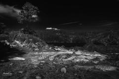 Tree and Rocks (NormFox) Tags: bw bnw blackandwhite blackandwhiteartistry california monochrome mountains outdoor pinecrestlake rocks sky trees pinecrest unitedstates us