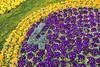 Geneva's flower clock (julesnene) Tags: canon1022mmlens canon7dmark2 canon7dmarkii flower geneva genevasflowerclock juliasumangil lhorlogefleurie swiss swissprecision switzerland clock flora flowerclock flowerpower julesnene landscape park precision primrose primroses travel genève ch